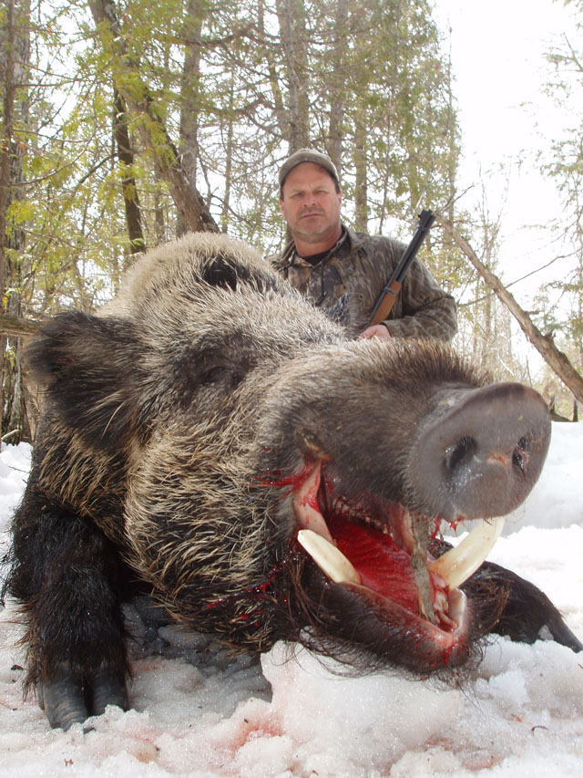 How Hunt Boar Genuine Russian Boar with only a 30 30