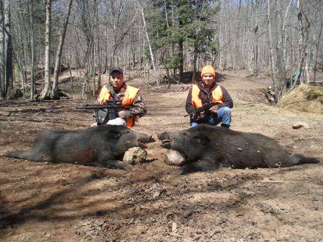 russian boars hunting